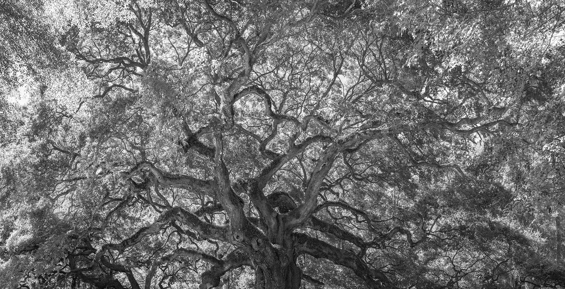 southlight_web_014_angel_oak_7363_7366